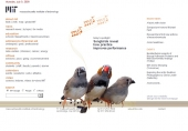 Songbirds reveal how practice improves performance