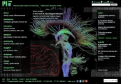 A new look at neurological disease