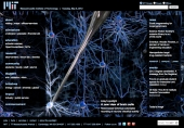 A new view of brain cells