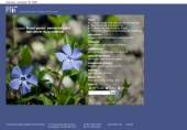 flower power: periwinkle plant has cancer drug potential