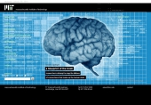 a blueprint of the brain researchers attempt to map the billions of connections that make up the human mind