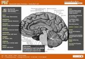 Redrawing the brain's boundaries