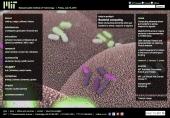 Bacterial computing