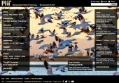 Tracking bird flu